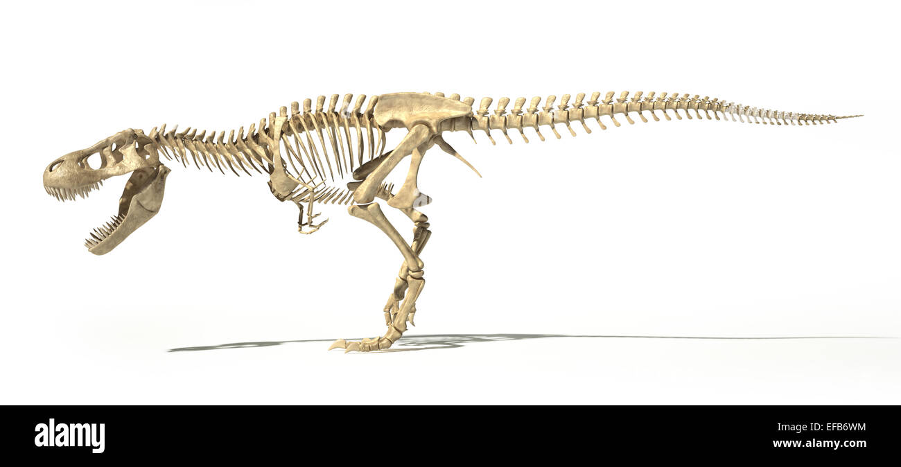 Side View Tyrannosaurus Rex Dinosaur High Resolution Stock Photography And Images Alamy