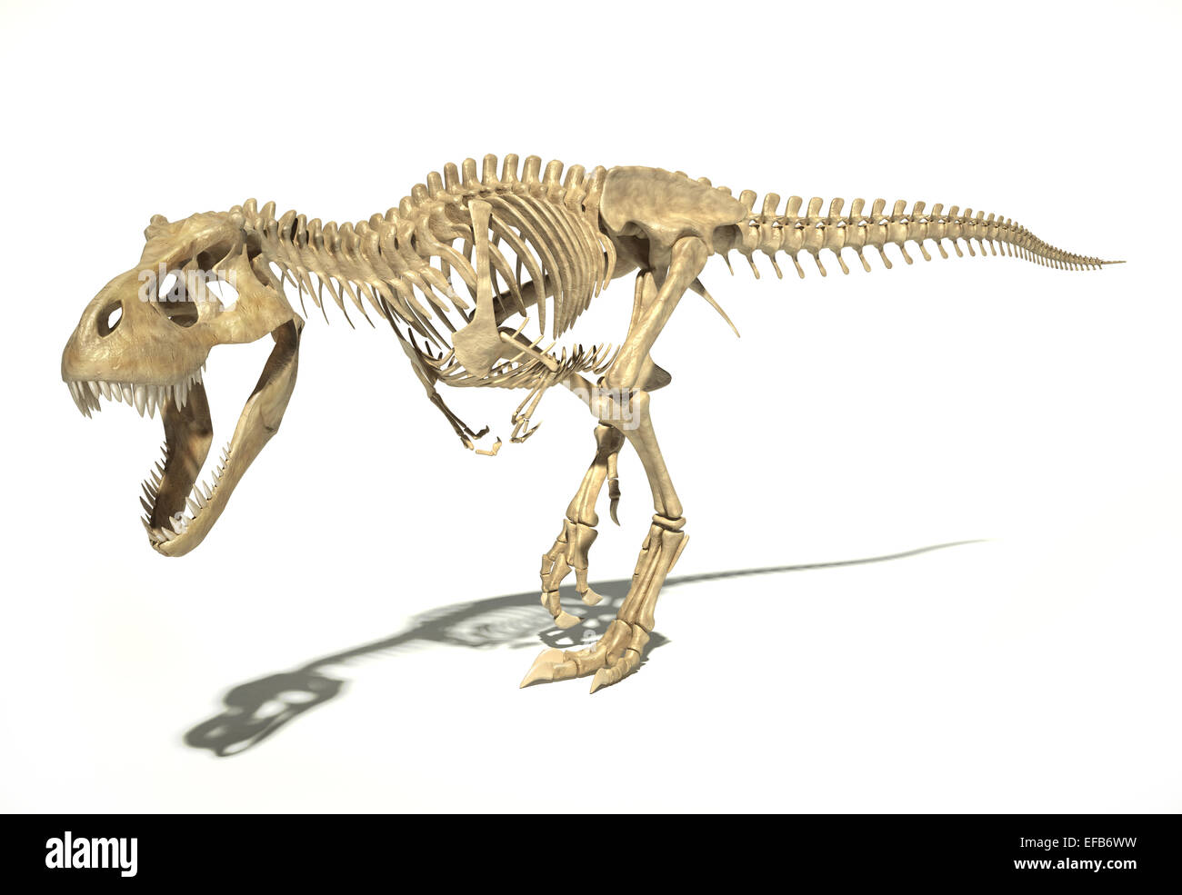 T-Rex dinosaur photo-realistic and scientifically correct, full skeleton in dynamic pose, perspective view. On white - Stock Image