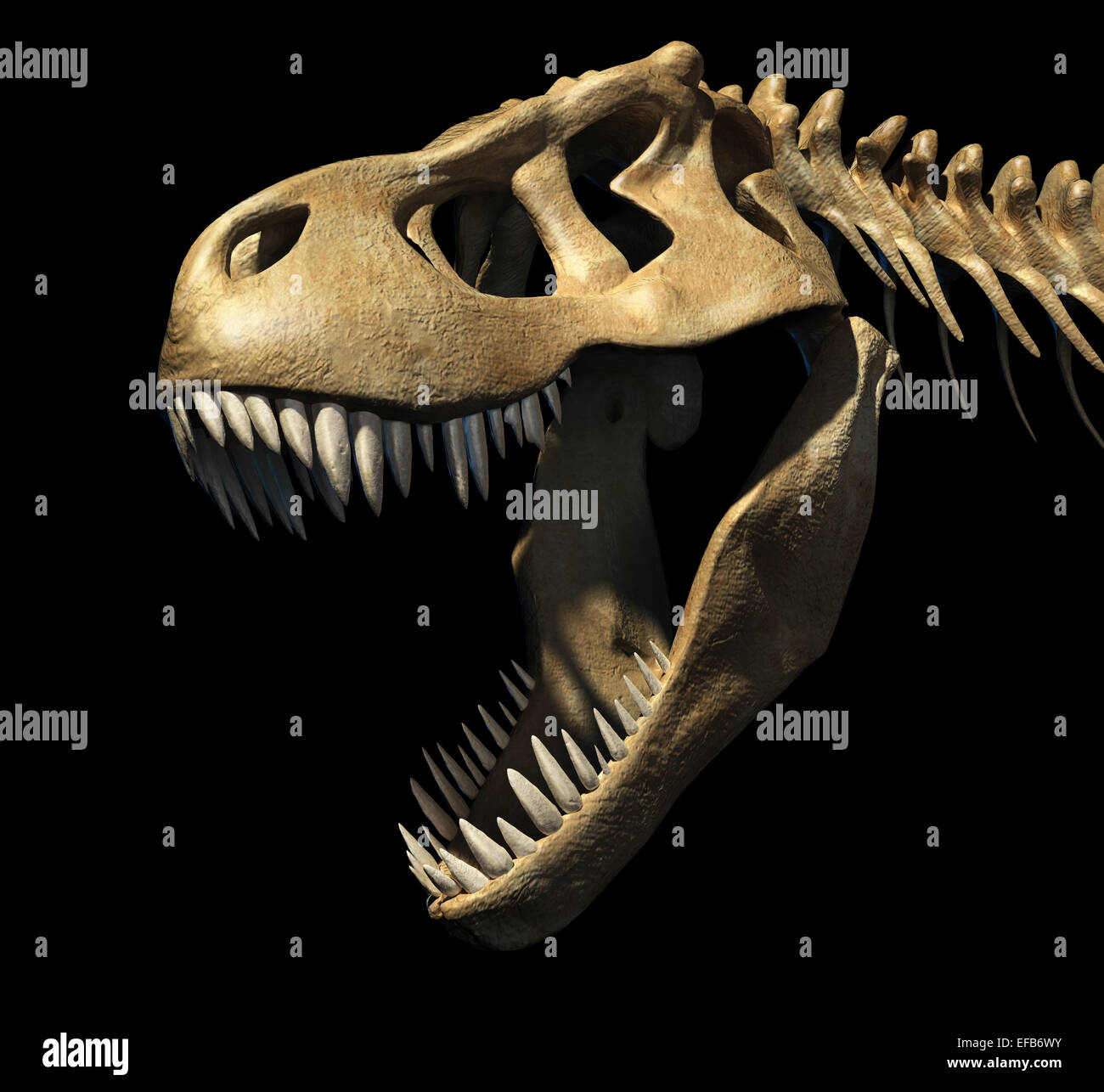T-Rex skull close-up. On black background. Clipping path included. - Stock Image