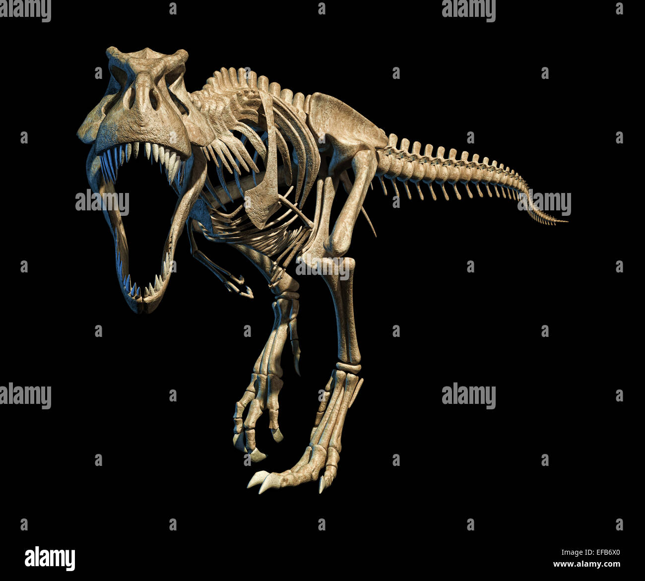 T-Rex photo-realistic and scientifically correct, full skeleton in dynamic pose , on black background. Front view. - Stock Image
