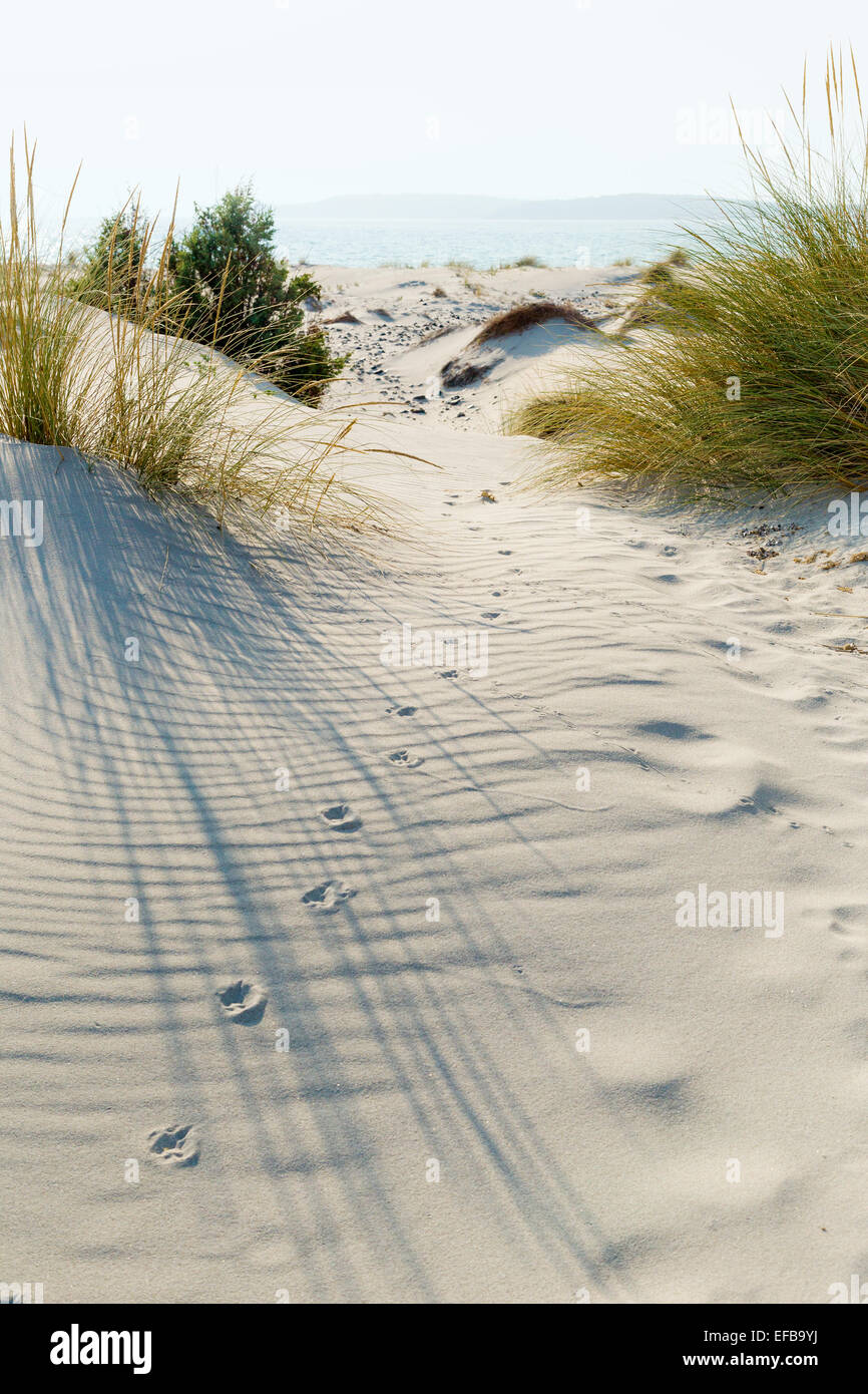 Animal tracks in the sand in the dunes. - Stock Image