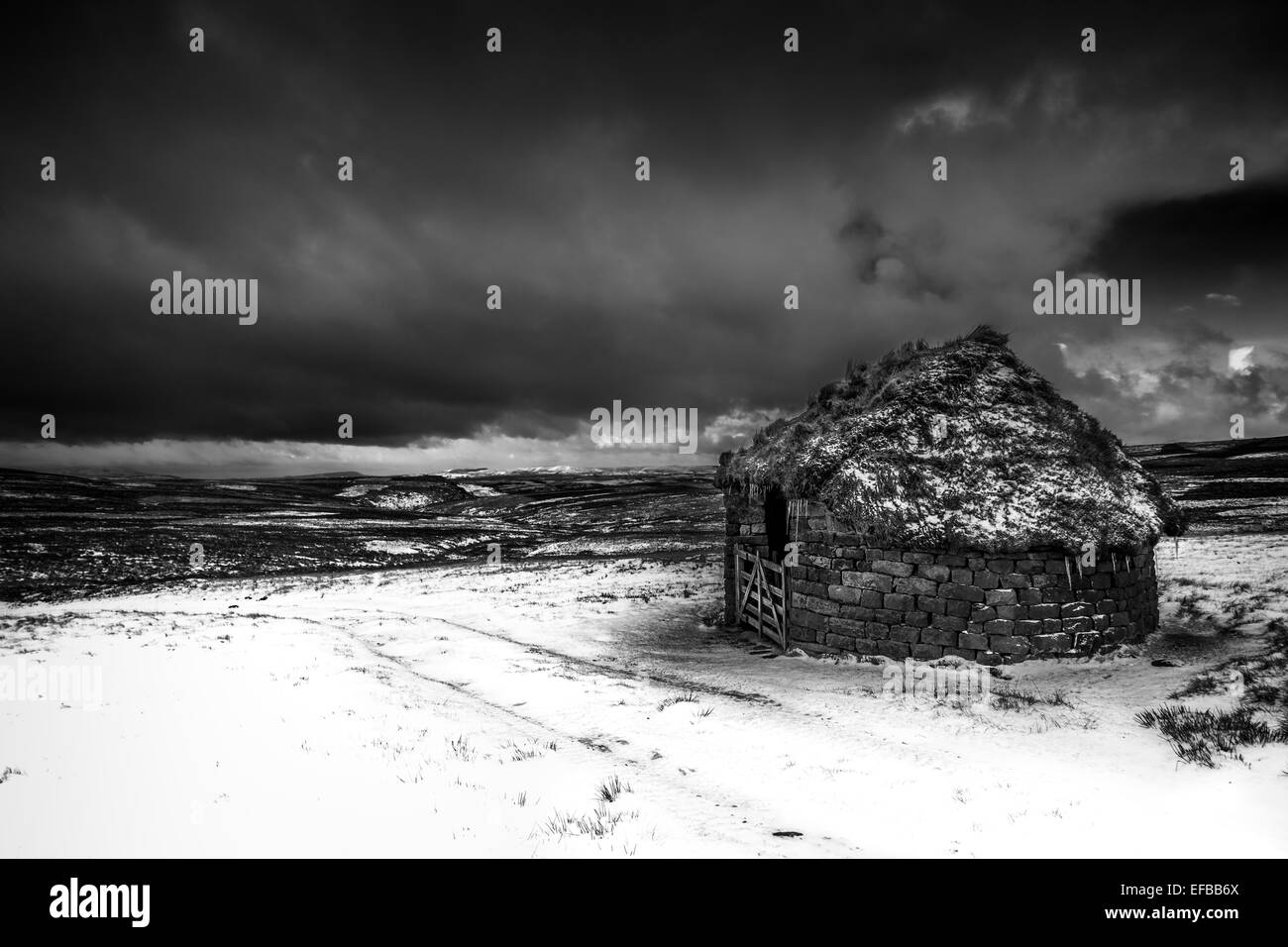 Winter ramble - Barn scene on a snowy Embsay Moor in the Yorkshire Dales, England, UK - Stock Image