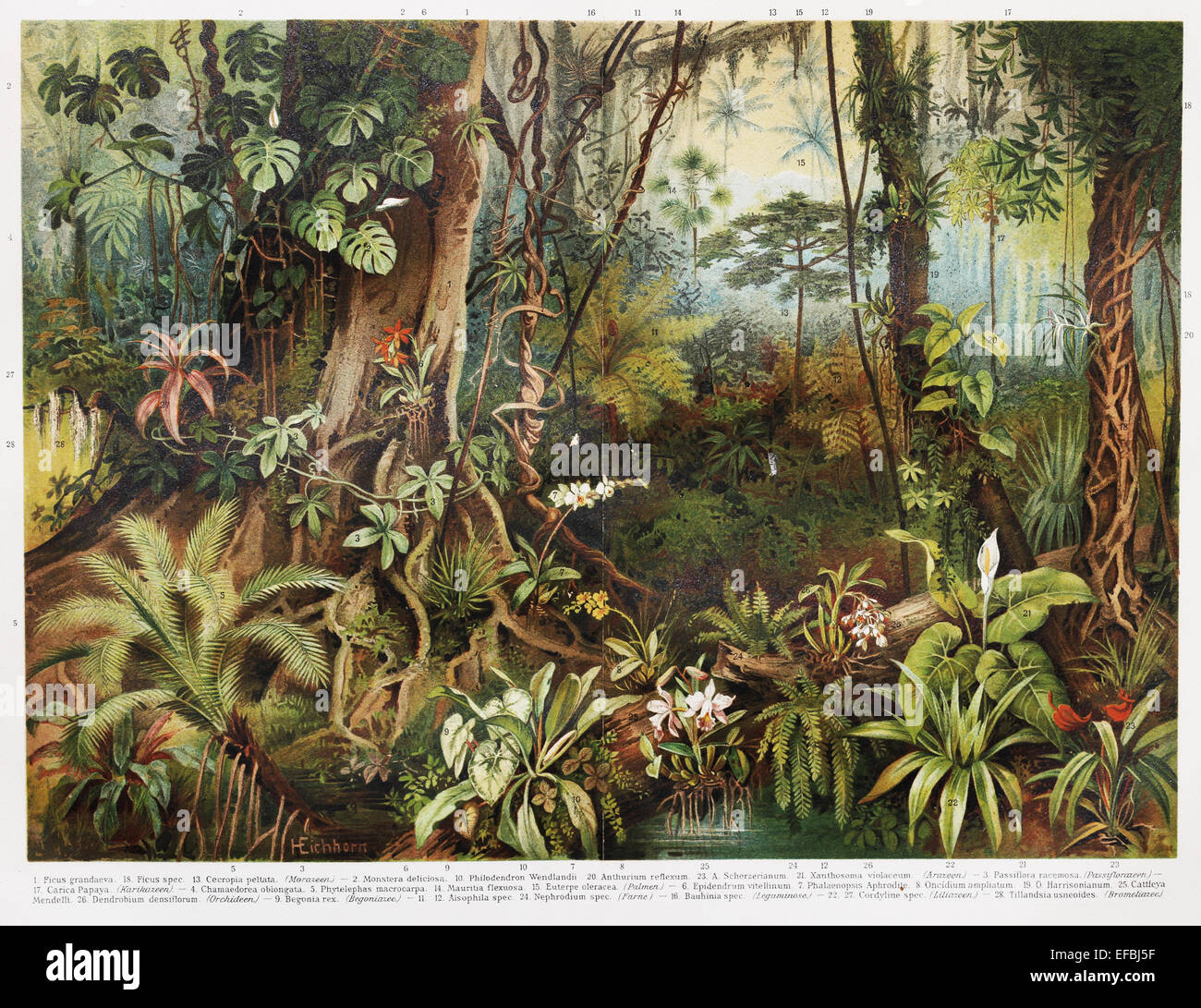 Vintage Drawing Of Tropical Forest Plants From The Beginning