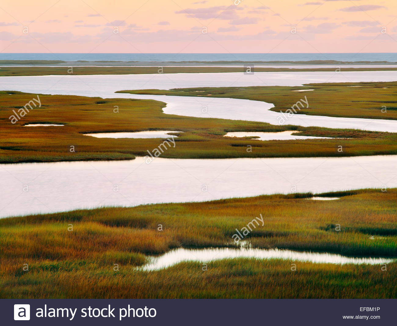 Nauset Marsh with Atlantic beach in distance, at dawn.  Cape Cod National Seashore, - Stock Image