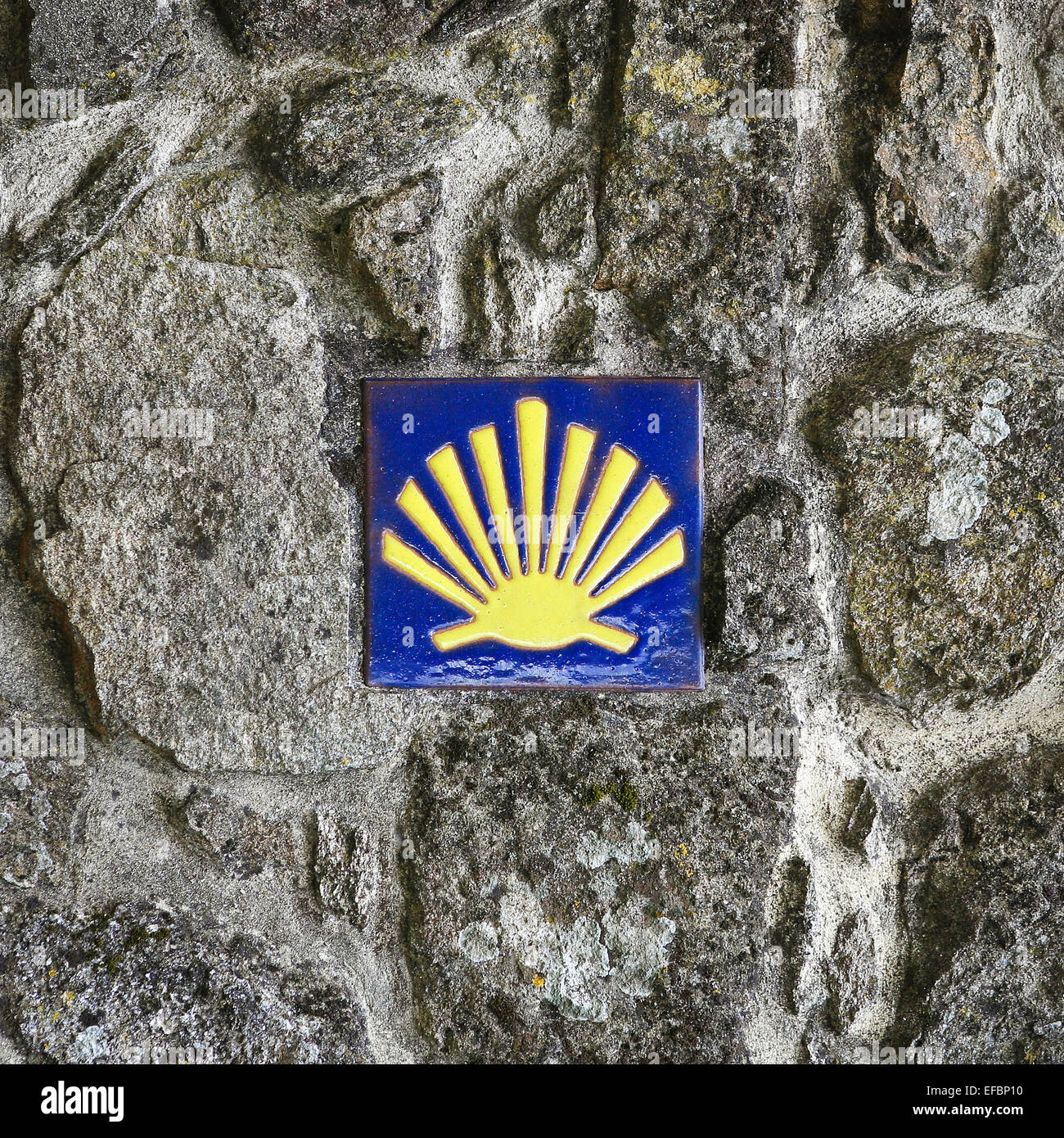 Pilgrim's Shell (scallop), Symbol of the Way of Saint James in Tui, Galicia, Spain. - Stock Image