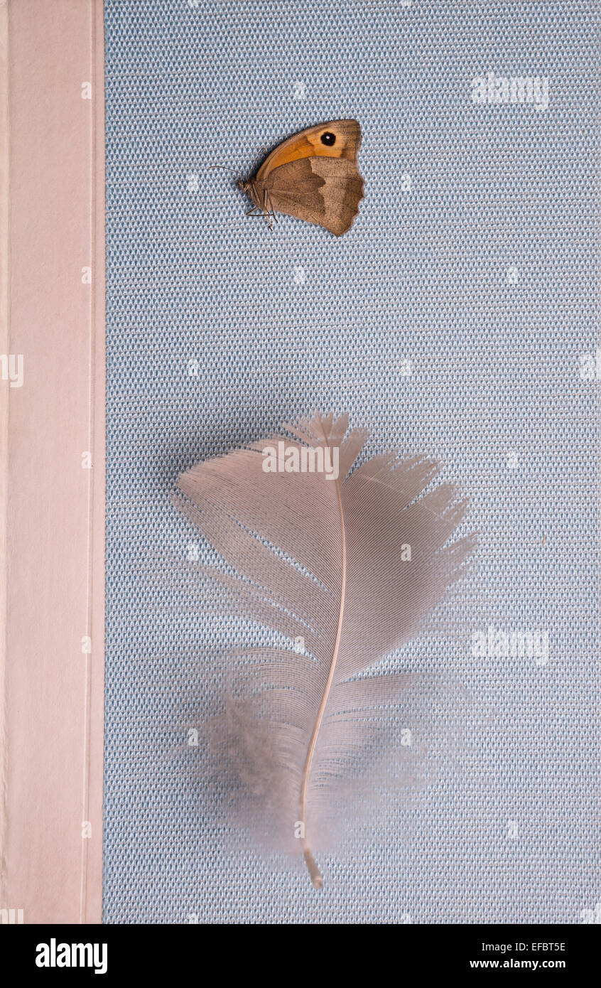 Feather and butterfly on a book - Stock Image