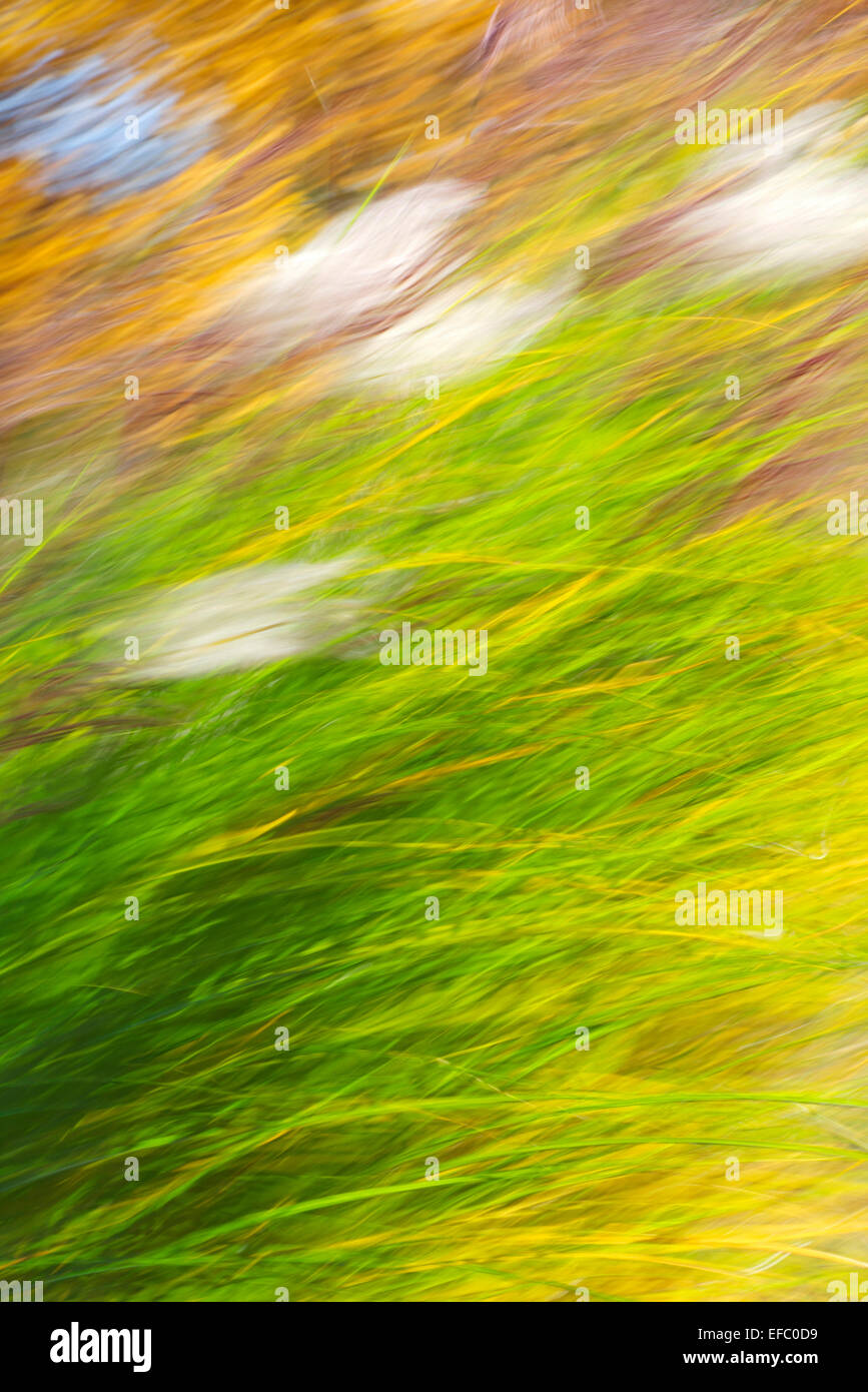 Fall grass abstract motion blur. - Stock Image