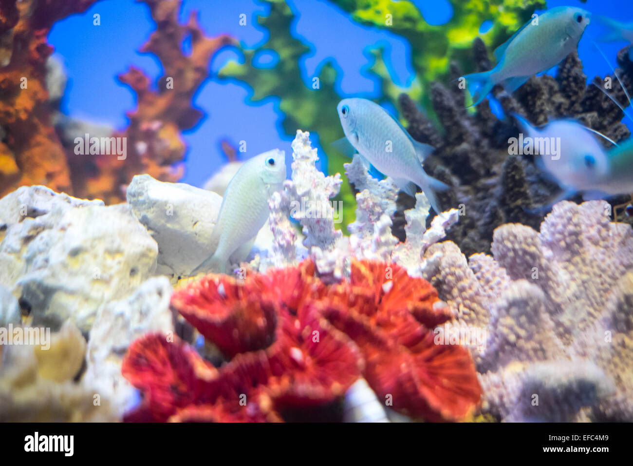 Colourful Fish Swimming Stock Photos & Colourful Fish Swimming Stock ...