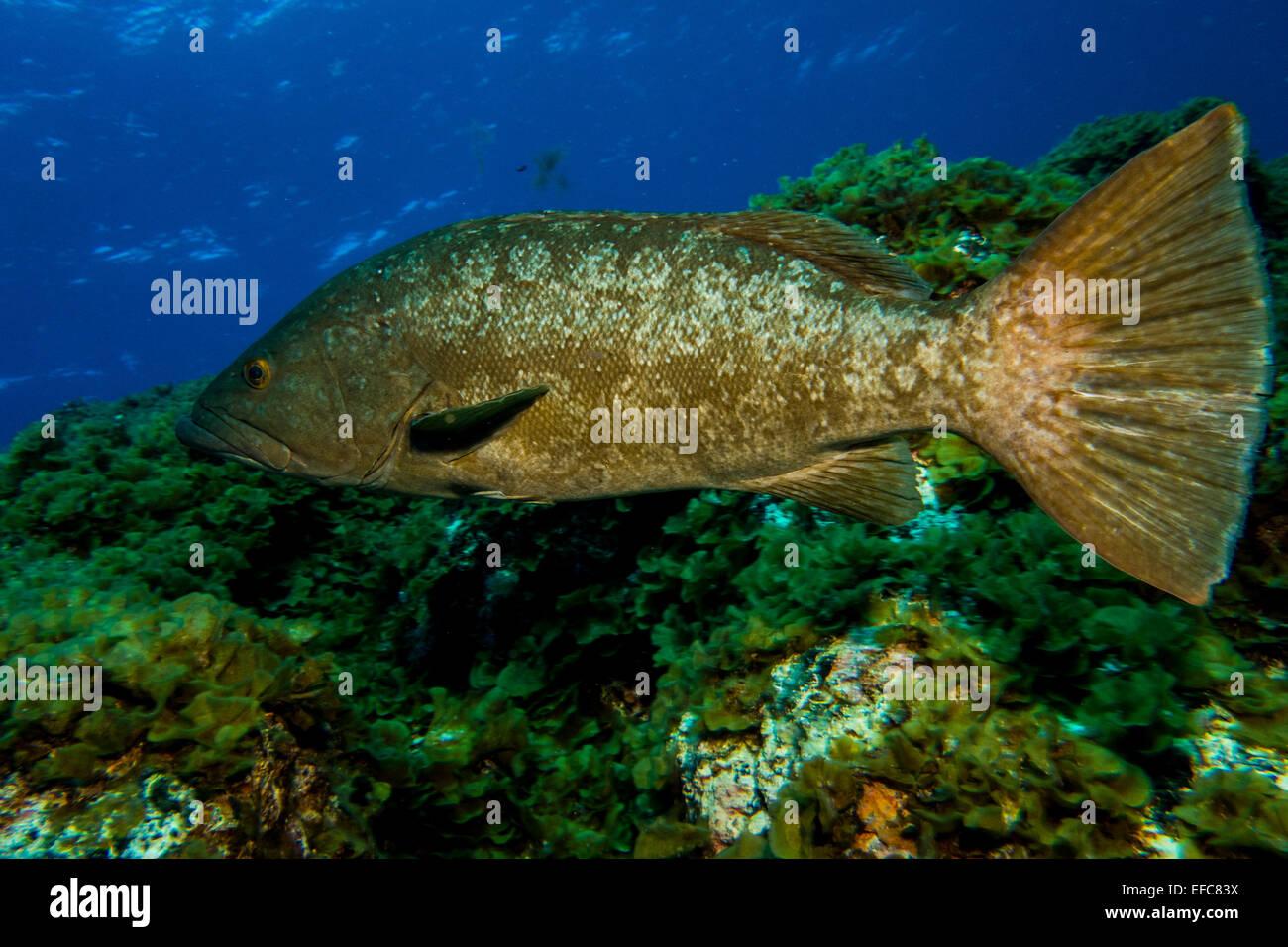 Underwater, Canary island, marine life, ocean, sea, colorful, fish ...