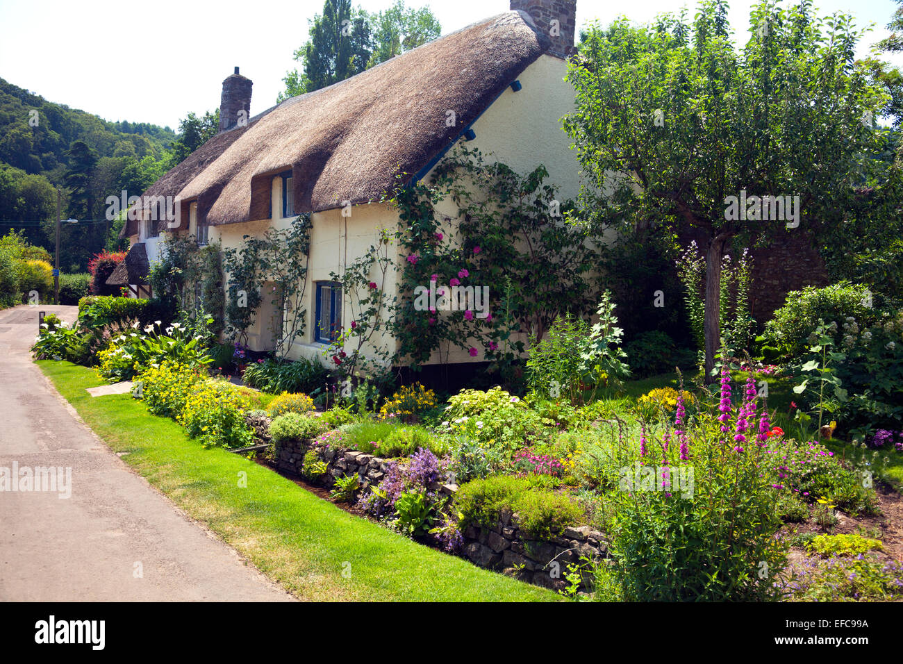 A picturesque thatched cottage and garden in Dunster, Somerset, England, UK - Stock Image