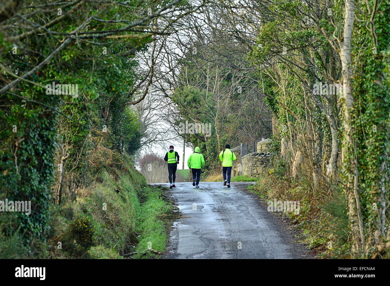 Joggers running on tree lined country road, Londonderry (Derry), Northern Ireland - Stock Image