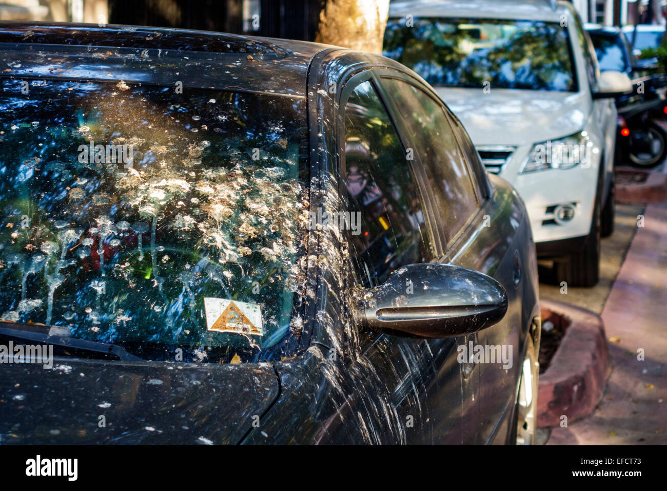 Miami Beach Florida car automobile vehicle bird droppings dirty guano excrement - Stock Image