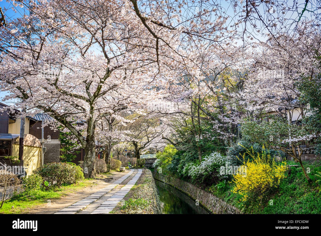 Kyoto, Japan at Philosopher's Walk in the spring season. - Stock Image