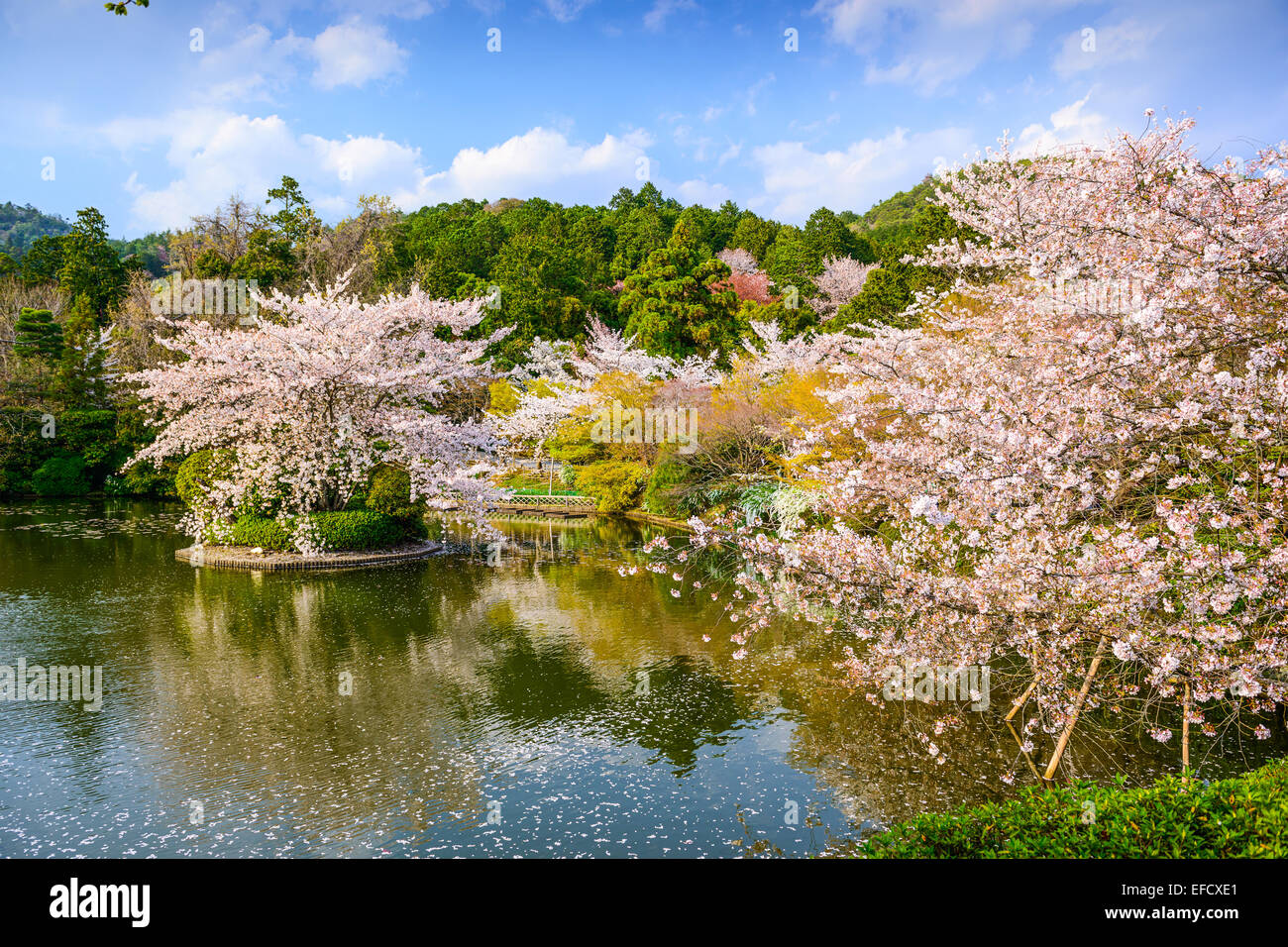 Kyoto, Japan springtime at Ryoanji Temple's pond. - Stock Image