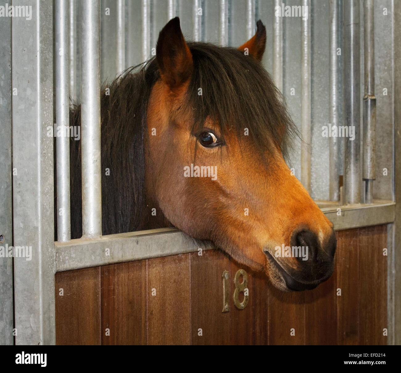 Funny horse faces at Blackpool, Lancashire, 31st January, 2015.  World Horse Welfare's Penny Farm is home to - Stock Image