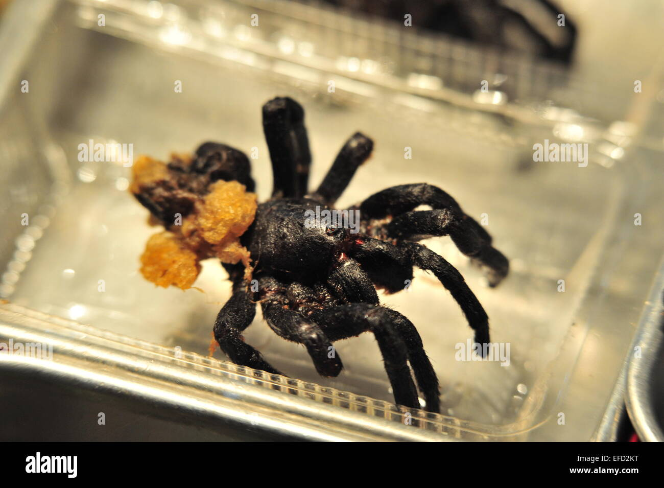 Spider at Nightmarket, Bangkok, Thailand. - Stock Image