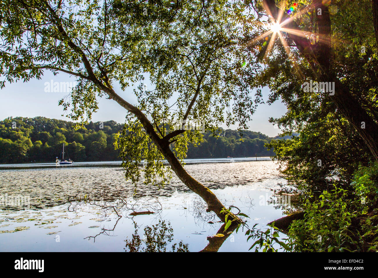 Nature reserve Heisinger Ruhrauen, on the west bank of the Essen Baldeneysee, a refuge and breeding ground for many - Stock Image