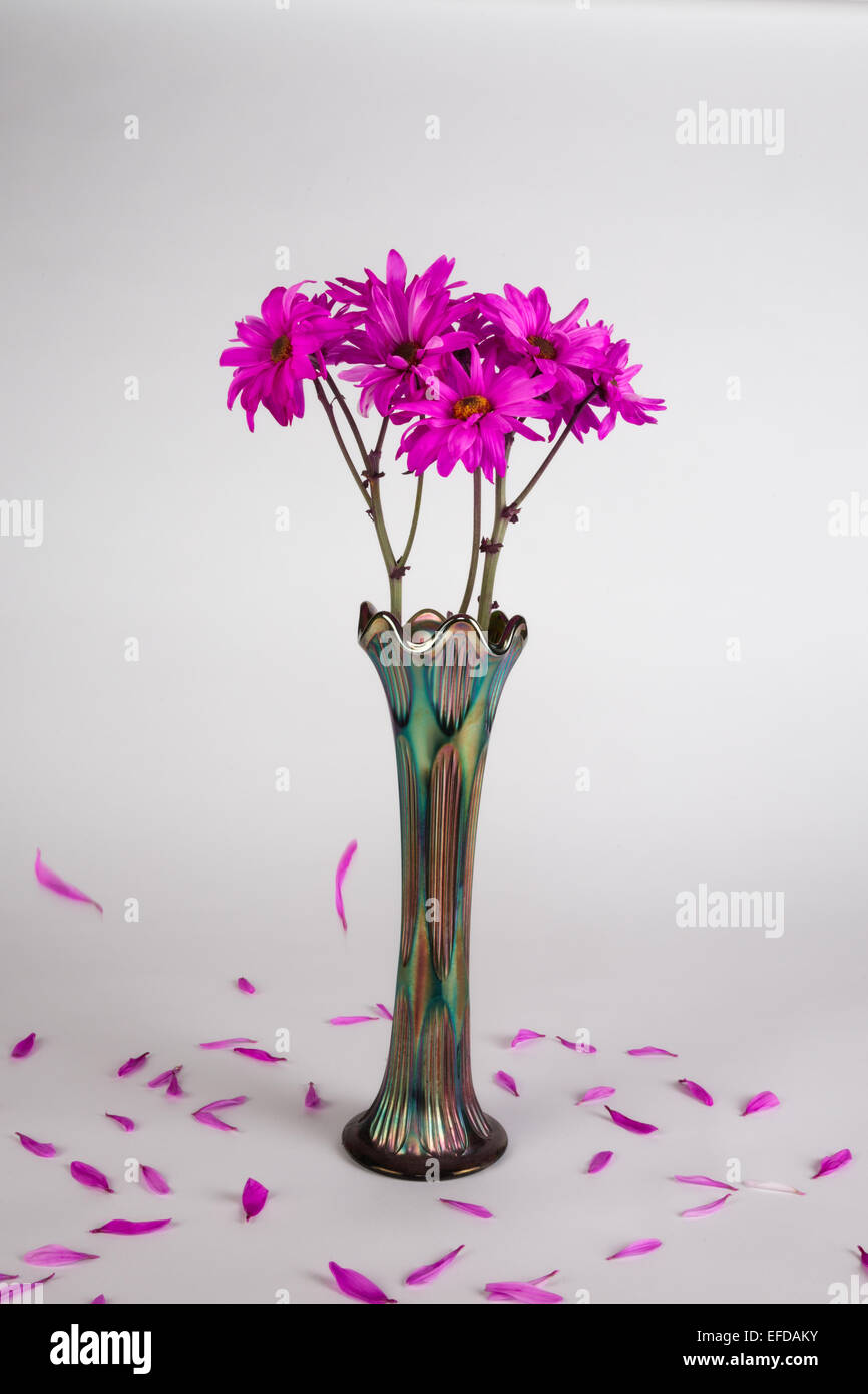 Pink daisies in an antique vase with falling petals on a white seamless background - Stock Image