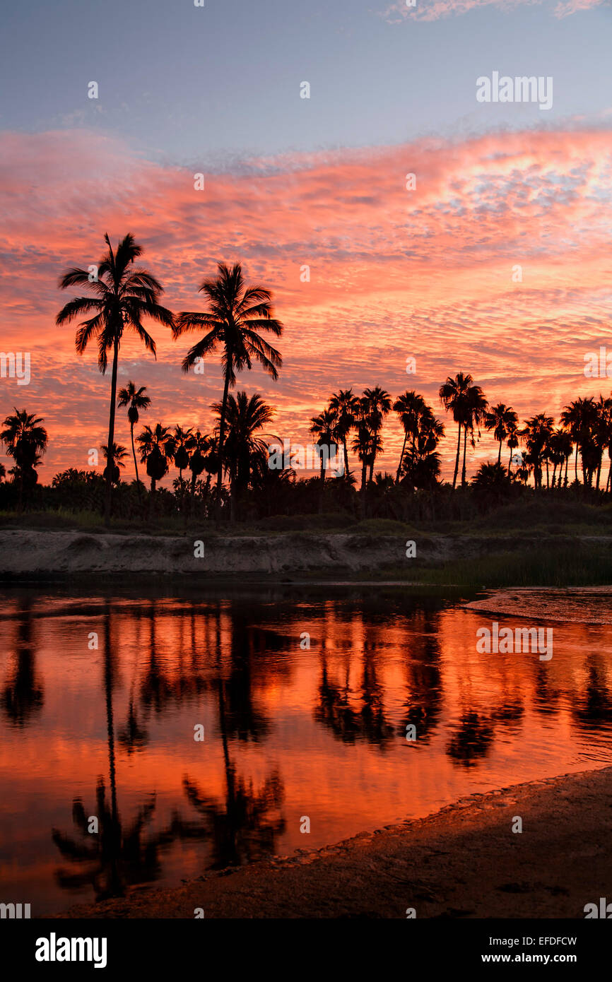 Silhouetted palm trees and lagoon at sunrise, Las Palmas Beach, Todos Santos, Baja California Sur, Mexico - Stock Image