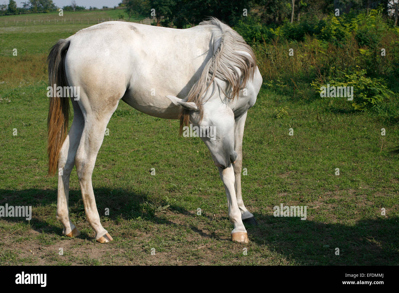 Yearling Thoroughbred Stock Photos Amp Yearling Thoroughbred