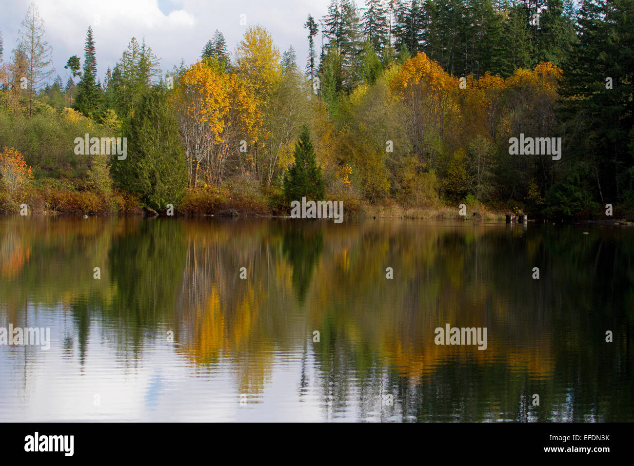 Autumn view of trees with reflections across lake near Robertson Creek Hatchery, Port Alberni, Vancouver Island, - Stock Image