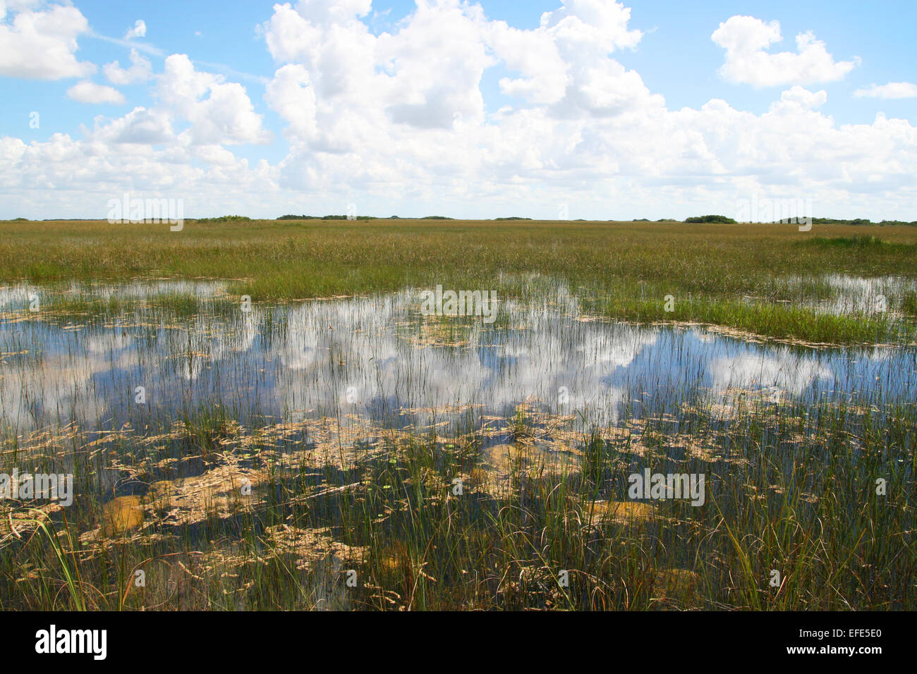 Everglades Nationalpark Stock Photo