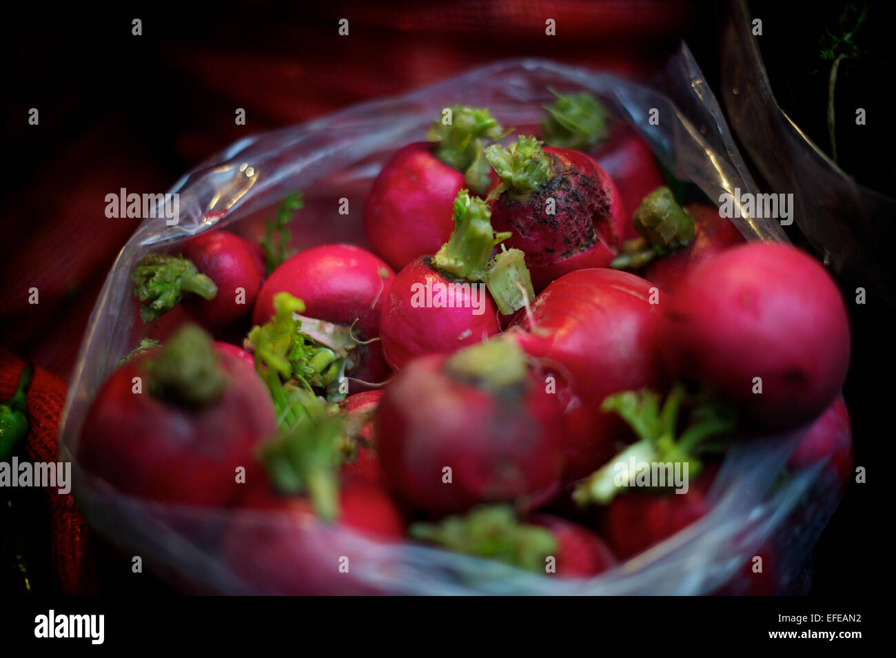 Radishes for sale at the market in the Kadikoy area (Asia)  is pictured as part of a photo essay on winter breaks - Stock Image