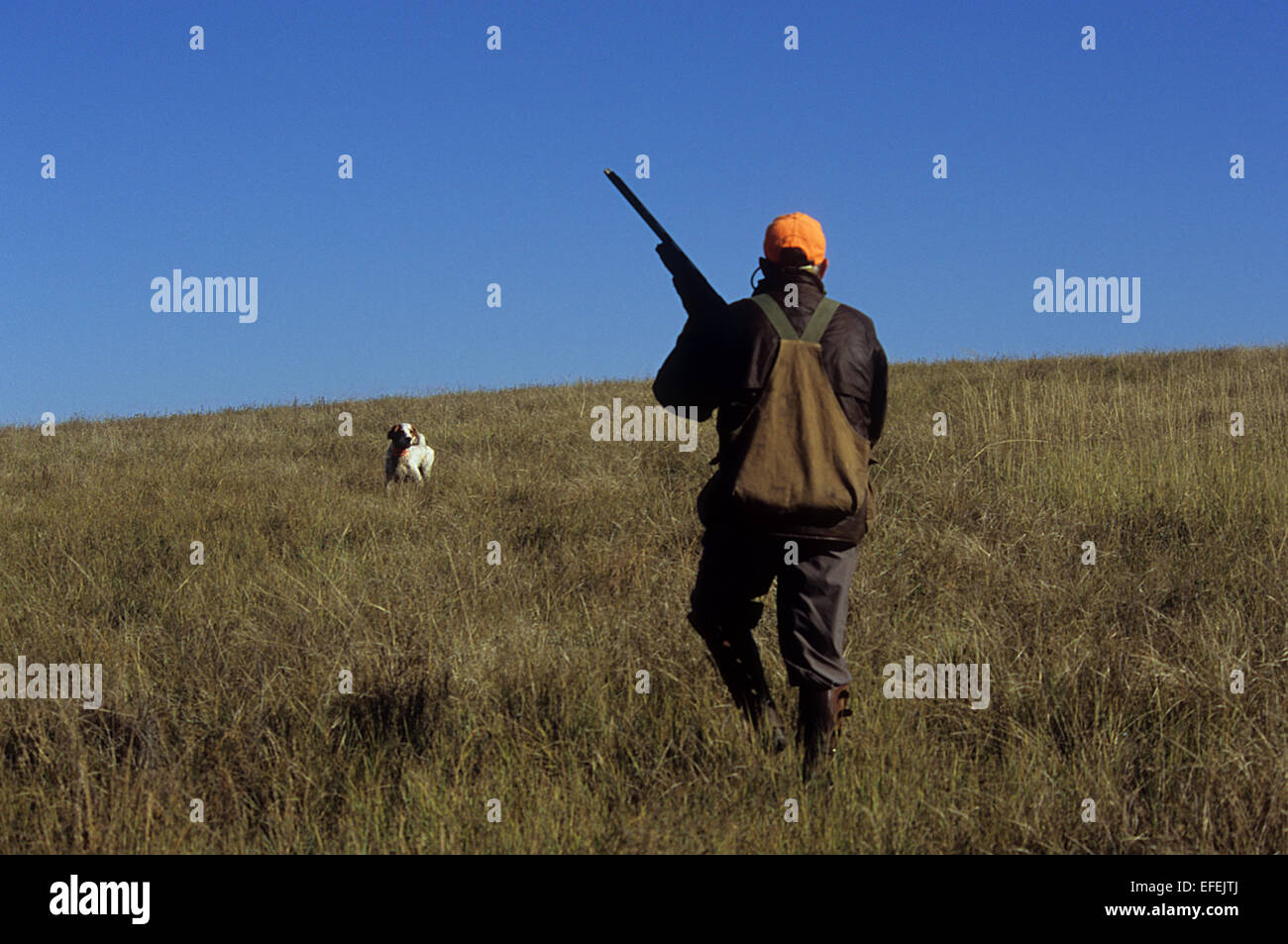 A grouse hunter approaches his English Setter Hunting dog near Pierre South Dakota - Stock Image