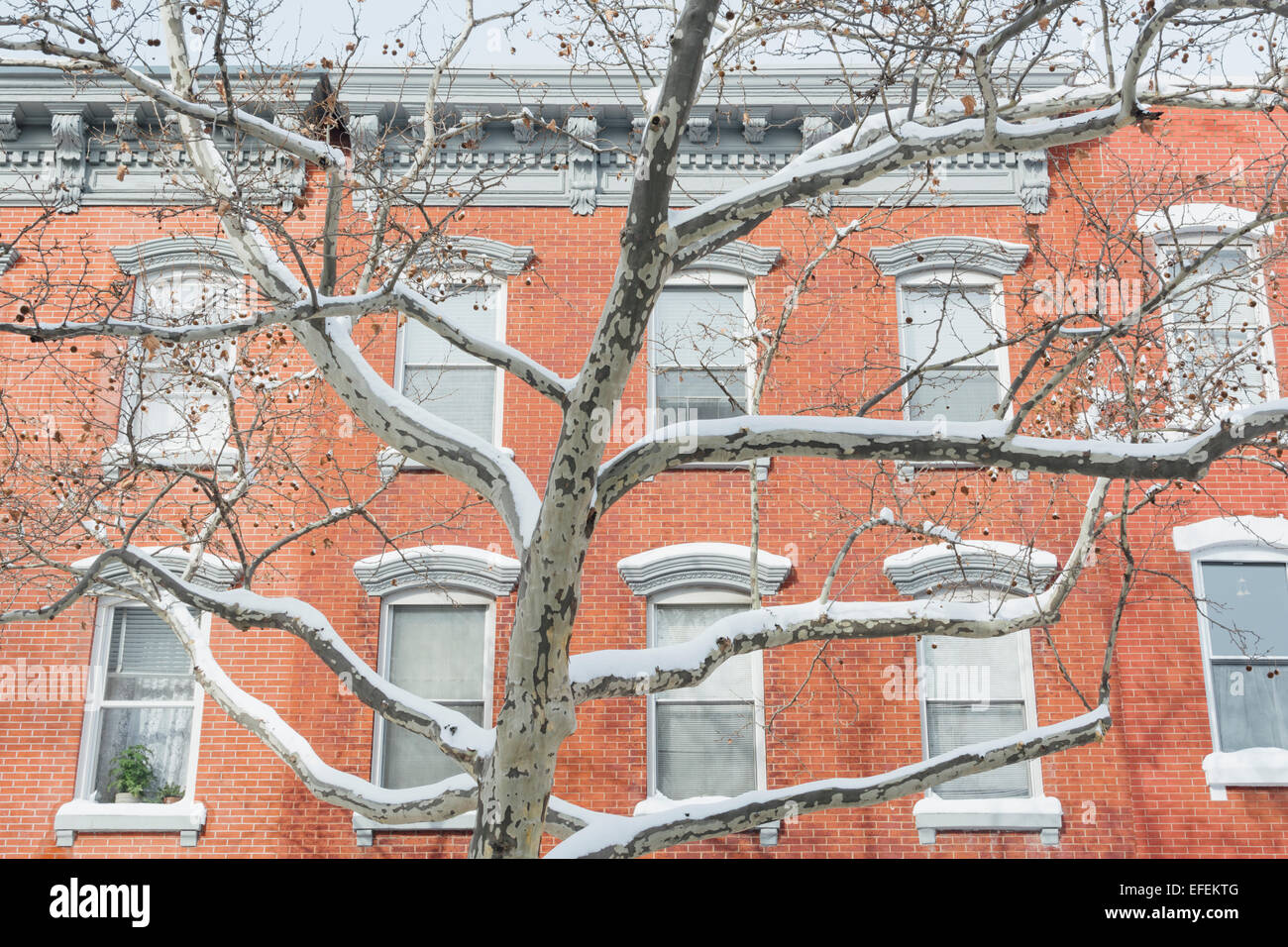 Exterior of row houses and tree covered with snow. Greenpoint Brooklyn. New York City - Stock Image