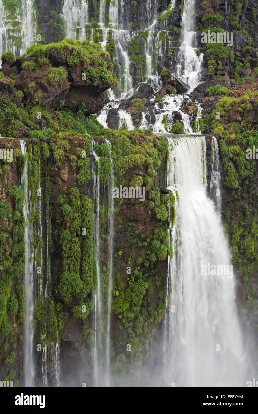 Waterfalls and moss from San Martin Island, Iguazu National Park, Argentina - Stock Image