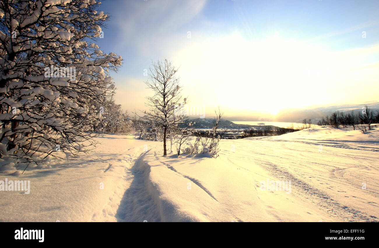 Snow coverered trees along a Norwegian ski slope with frozen lake in the background. - Stock Image