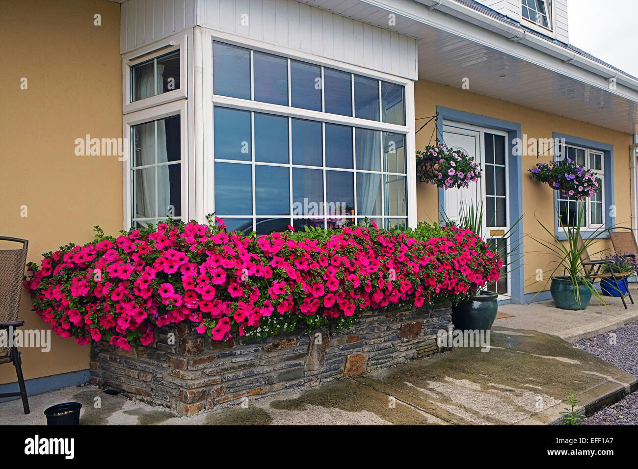 Petunia flower displays outdoor window box Ireland Stock Photo