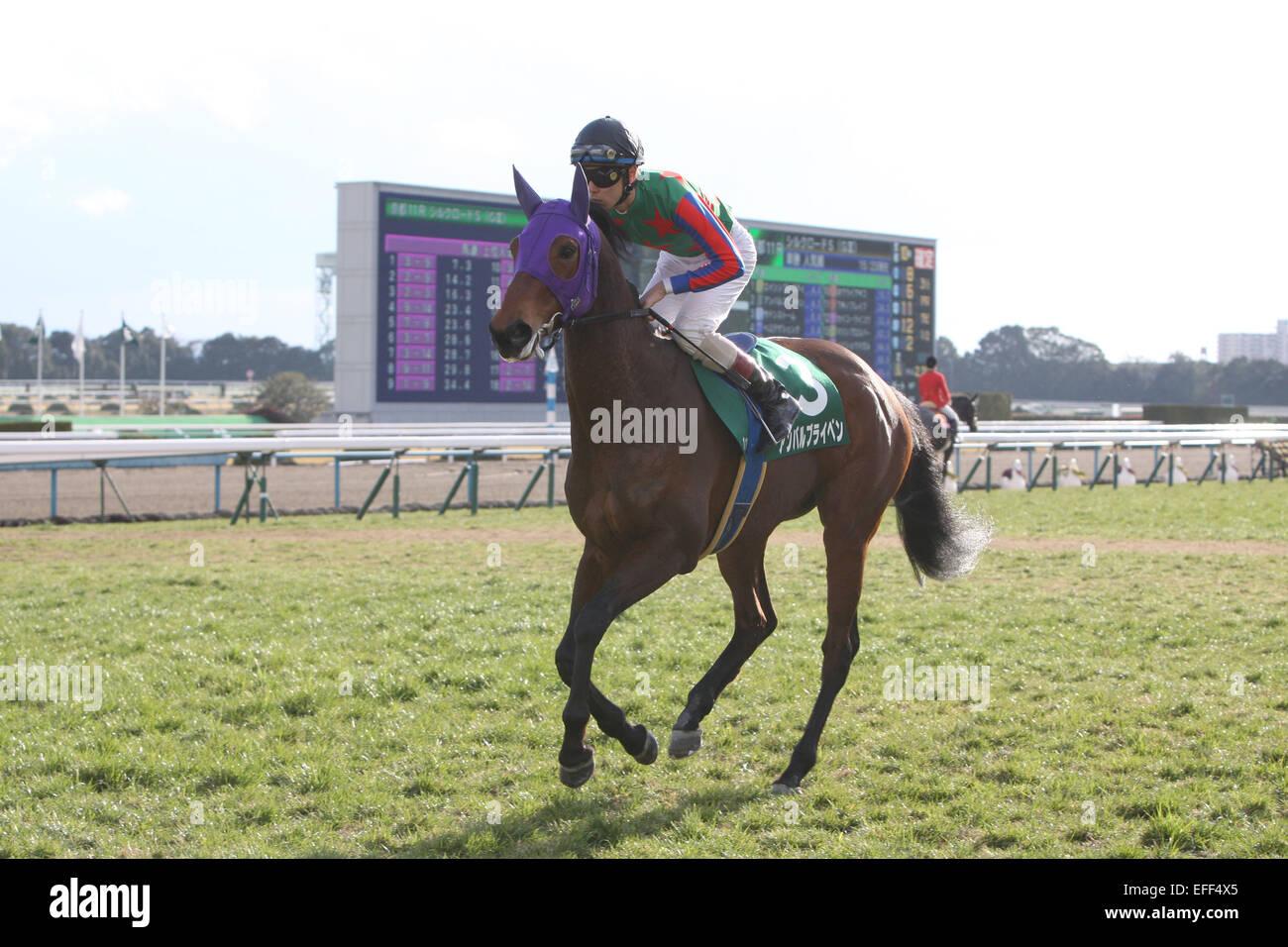 Kyoto, Japan. 1st Feb, 2015. Am Ball Bleiben (Ken Tanaka) Horse Racing : Am Ball Bleiben ridden by Ken Tanaka before - Stock Image