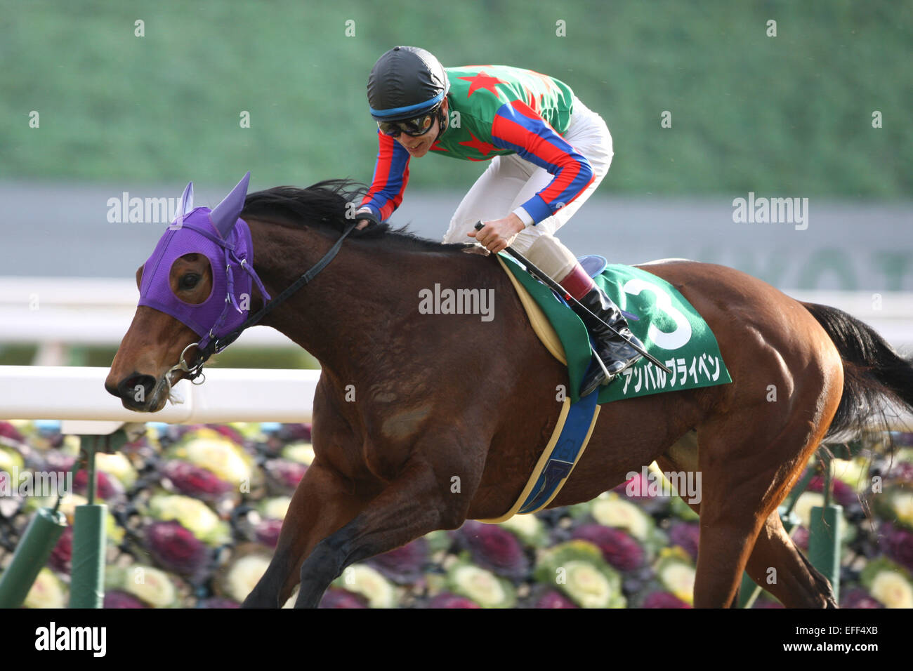 Kyoto, Japan. 1st Feb, 2015. Am Ball Bleiben (Ken Tanaka) Horse Racing : Am Ball Bleiben ridden by Ken Tanaka wins - Stock Image