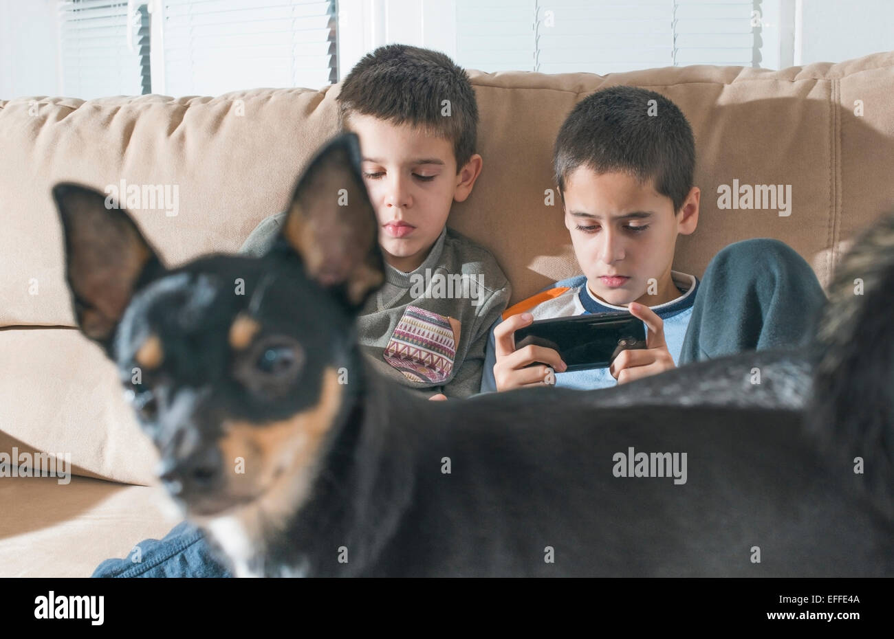 Two boys playing with their smartphones while dog standing in the foreground - Stock Image