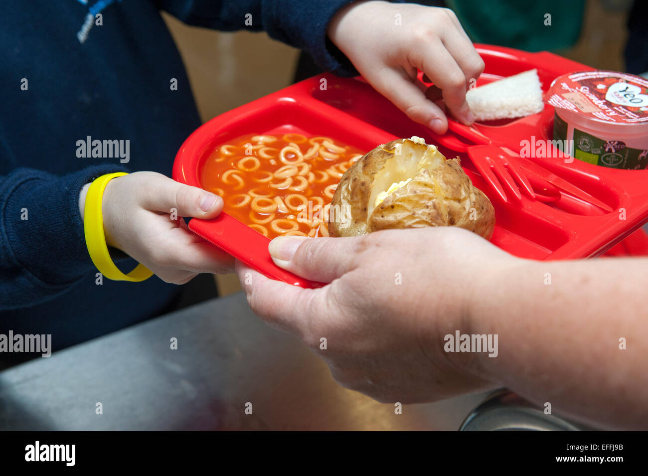 A young child at a UK primary school is handed a school dinner including a jacket potato and spaghetti hoops on Stock Photo