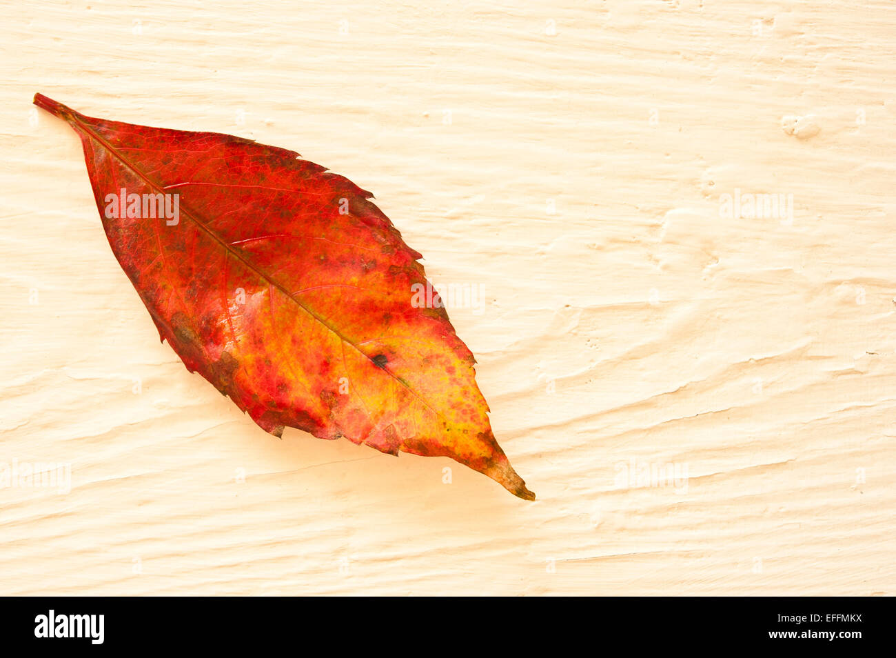 red autumn leaf on white wood Stock Photo