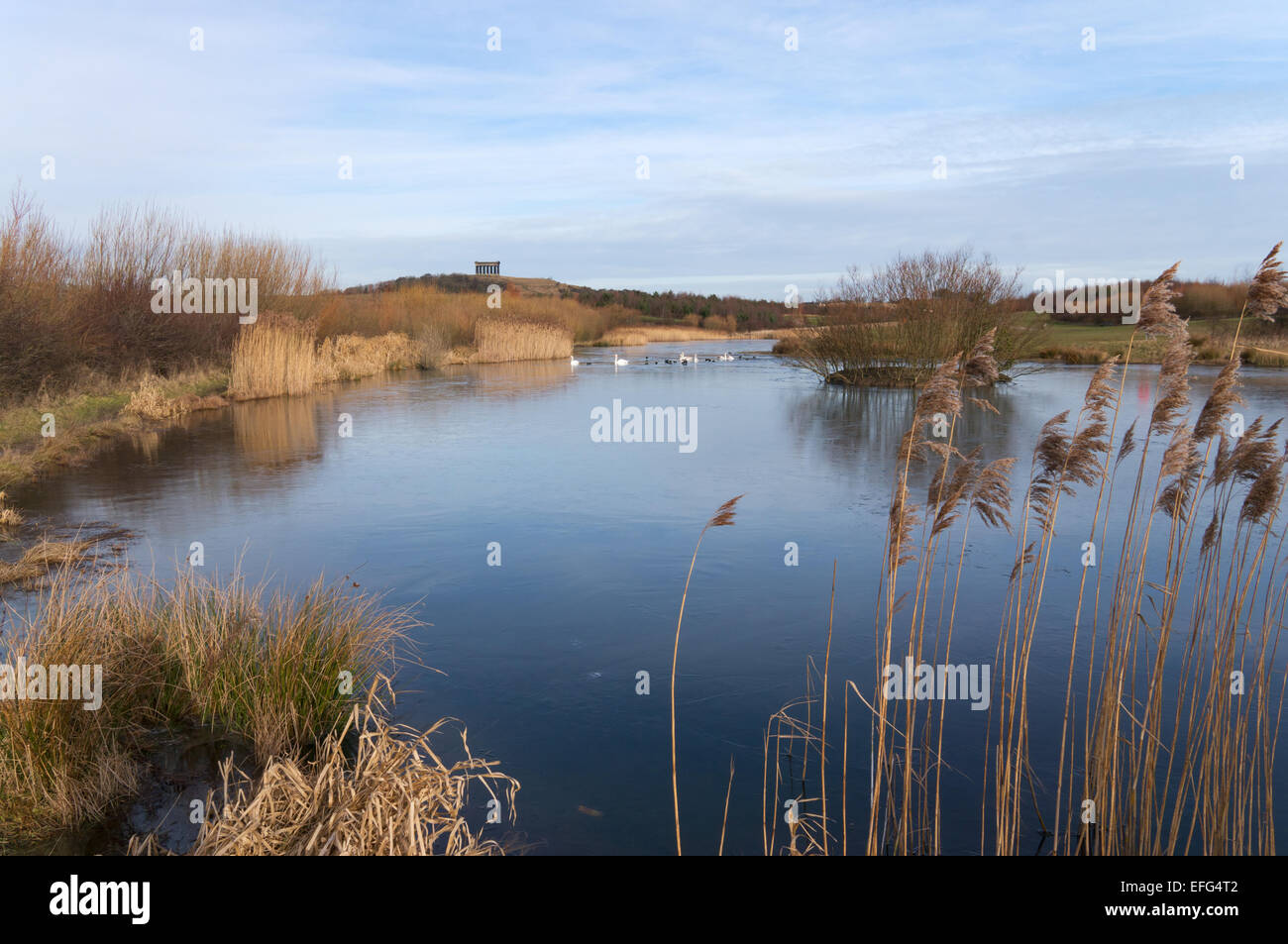 Scenic view over the fishing lake towards Penshaw Monument, Herrington Country Park, north east England, UK Stock Photo