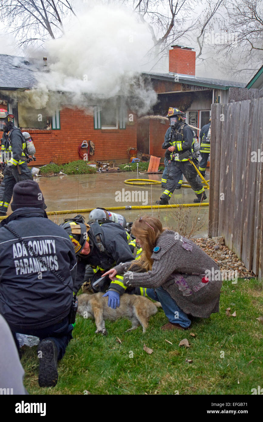 Firefighters revive a dog with oxygen rescued from a house fire in Boise, Idaho, USA. - Stock Image