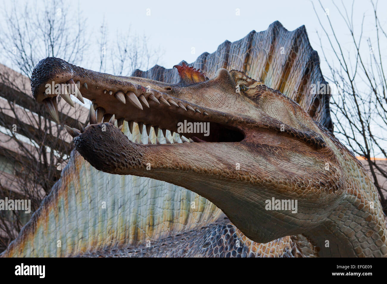 Spinosaurus sculpture in front of the National Geographic Society HQ - Washington, DC USA - Stock Image