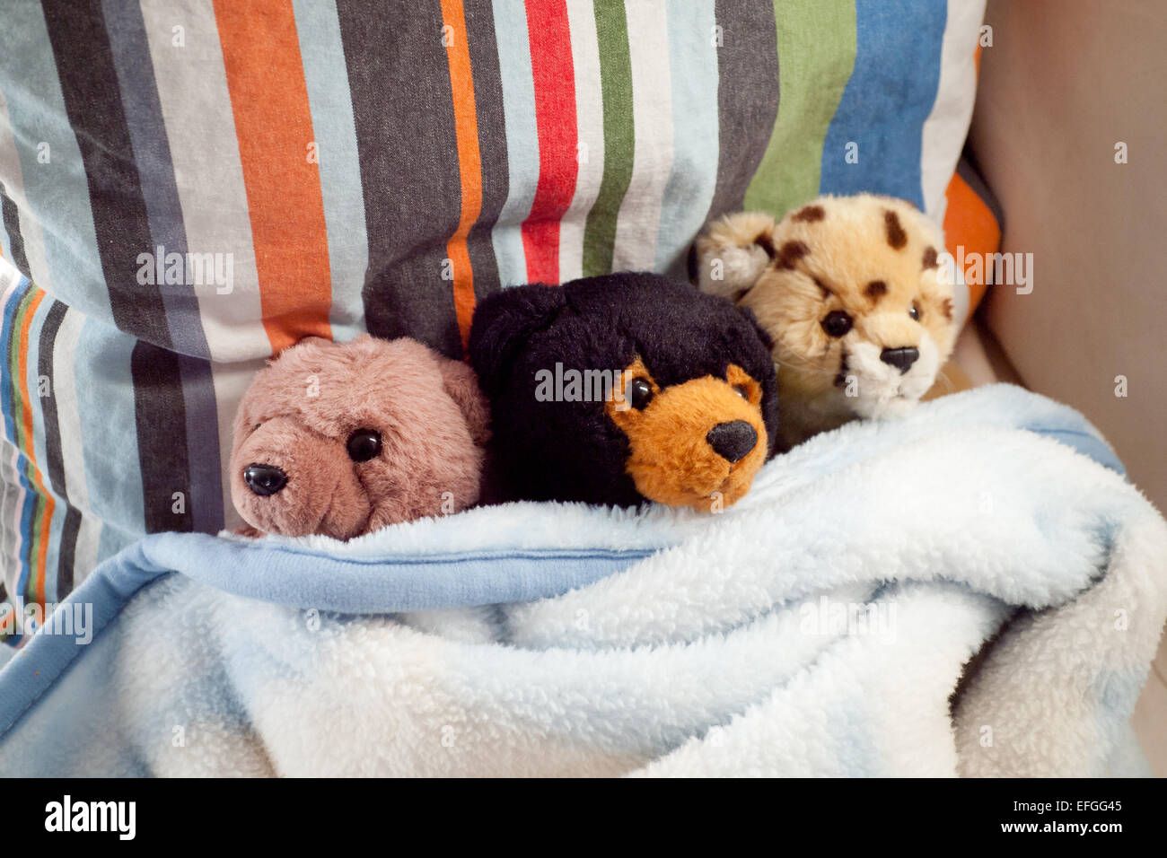 Two stuffed bears and one stuffed cheetah, cozy in a blanket. - Stock Image