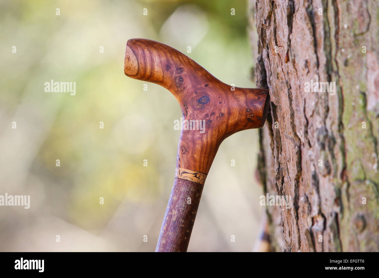Traditional Handcrafted Walking Stick With Burr Elm Wood Derby