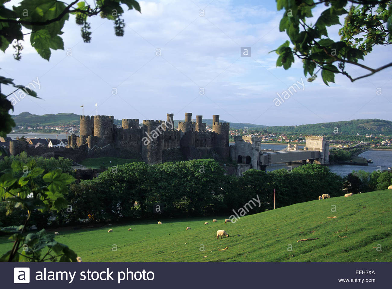 Conwy castle, Wales - Stock Image