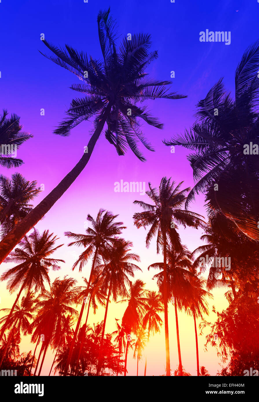 Palm trees silhouettes on tropical beach at sunset. - Stock Image