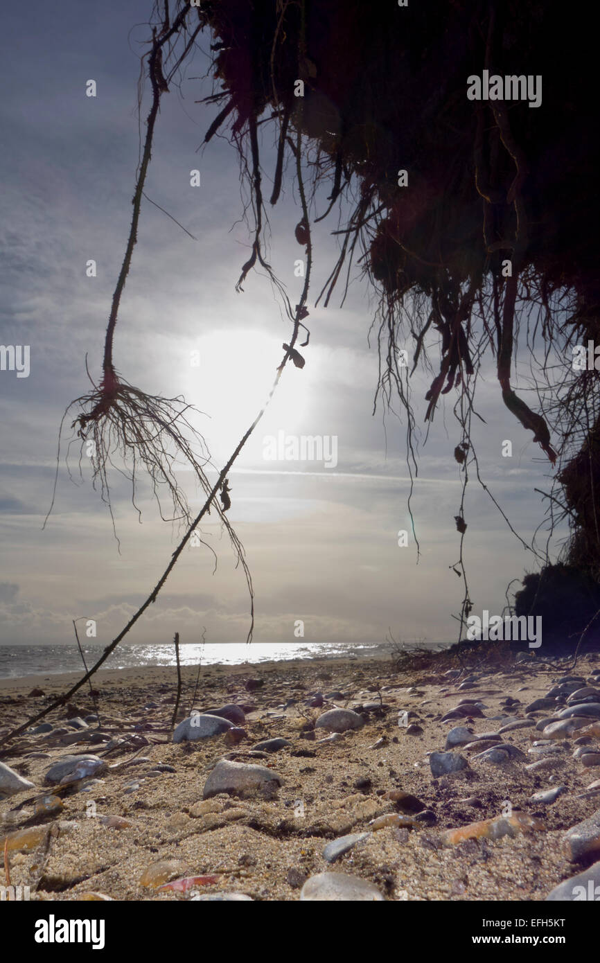 beach with erosion coastal vegetation - Stock Image