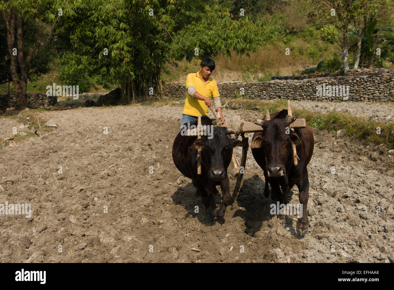 Ploughing fields on the Royal Trek, near Pokhara, Nepal - Stock Image