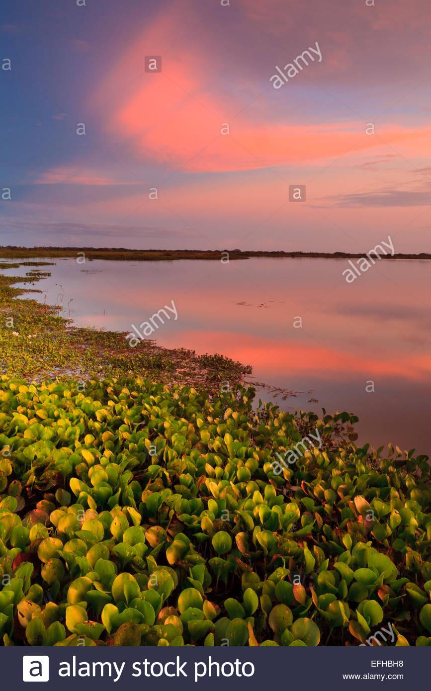 Colorful evening skies at Refugio de vida Silvestre Cienaga las Macanas, Herrera province, Republic of Panama. Stock Photo