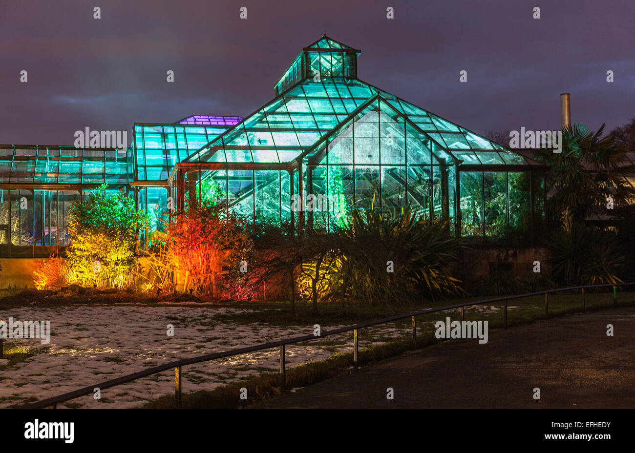 Illuminated Main Range of Glasshouse: The Electric Gardens / Lux Botanicum, an event organised at Glasgow Botanic - Stock Image