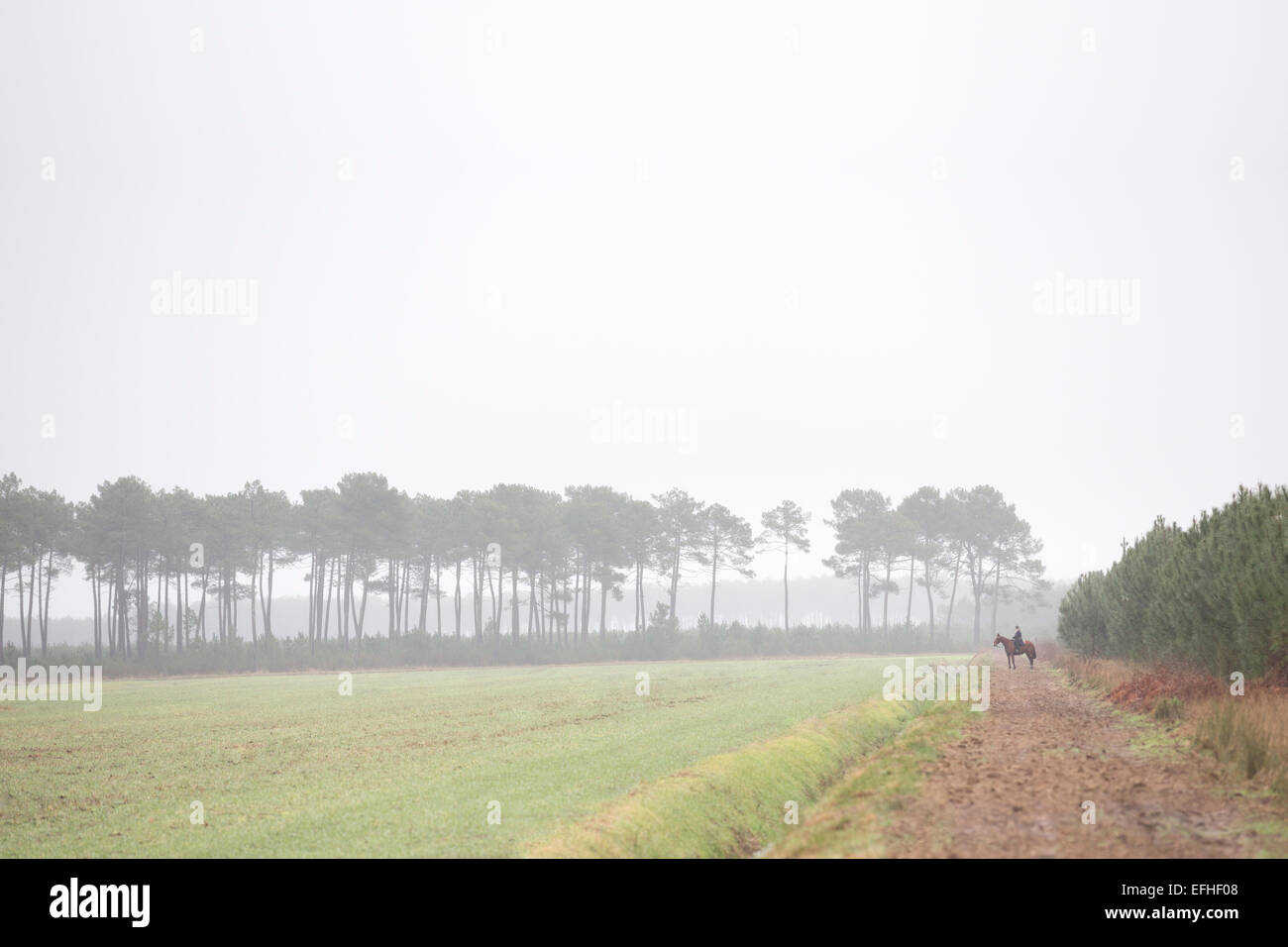 A male horse rider taking part in a deer hunting with hounds in the Landes region. Landscape. - Stock Image