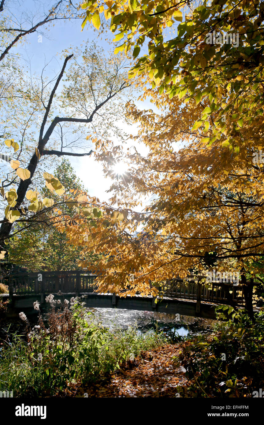 autumn scenic in forest and along brook and bridge crossing in Stock ...
